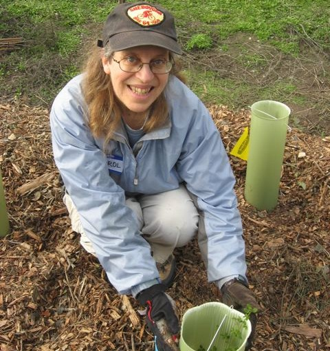 Carol showing off a newly planted coyote bush that she planted at Magic's newest restoration site in Palo Alto
